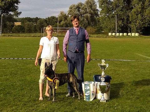 08.09.2018 HSCD Clubshow - Dyra van Cholinchove - Best in Show
