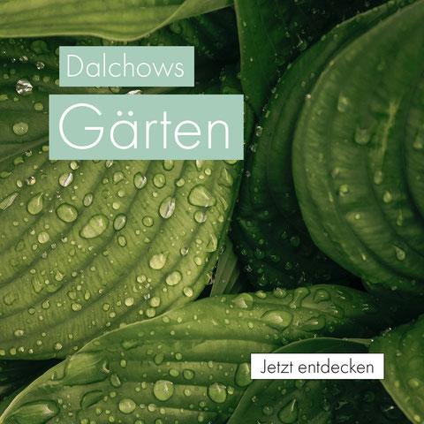 dalchows gärten - gartenbau - galabau - landschaftsgärtner - treysa - schwalmstadt - garten - terassenbau - teichanlagen - bepflanzung - pflanzen