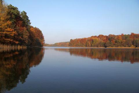 Herbststimmung am Vereinsgewässer Langer See, Blick von der südlichen Badestelle