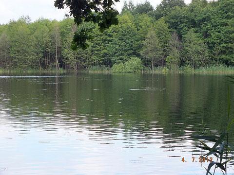 Der nördliche Teil des Domjüchsees liegt idyllisch im Wald
