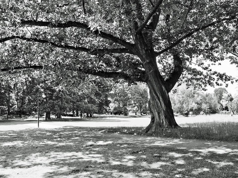 Volkspark Baum