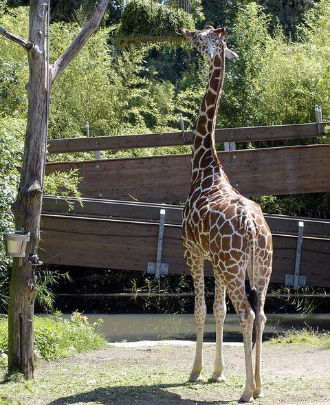 Zoo Duis