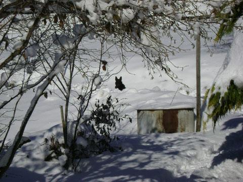 Suchbild Russel im Schnee