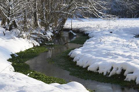 Naturnahe Quellbäche durchfliessen die Brunnmatten. Die auch im Winter grüne Brunnenkresse wird heute in eigens dafür angelegten Bachgräben gezüchtet. © Willy Jost