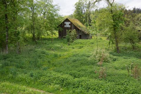 Der Erhalt und die Aufwertung des parkartige Feuchtgebiets der Brunnmatten wurde dank breiter Unterstützung aus der Region, auch jener des VLR, sichergestellt. © Willy Jost