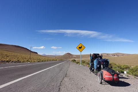 Route pass colchane-pisiga panneau lama et pino