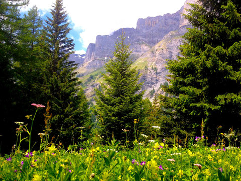 Meadow, trees, and mountain