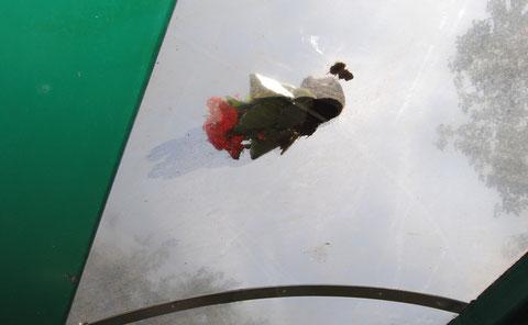 """""""Sie kommt nicht"""" ...Blumen auf dem Dach eines Wartehäuschens"""