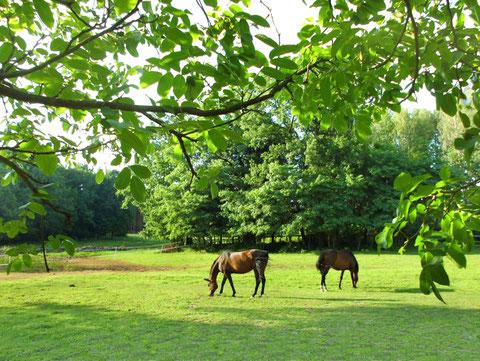 An den Hof angrenzende Pferdekoppeln und Wald