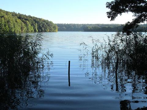 Klarer Waldsee Tornowsee Achtsamkeit