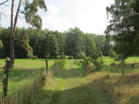 Das Gelände geht in die offene Natur über....