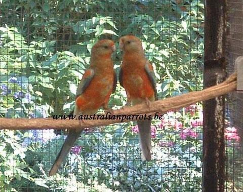 Jonge vogels - Young birds