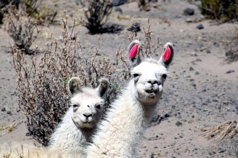 Reisen nach Peru und Bolivien