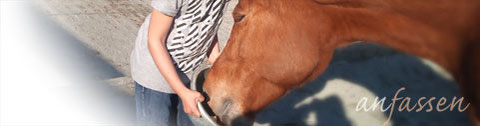Bild Kind füttert Pferd