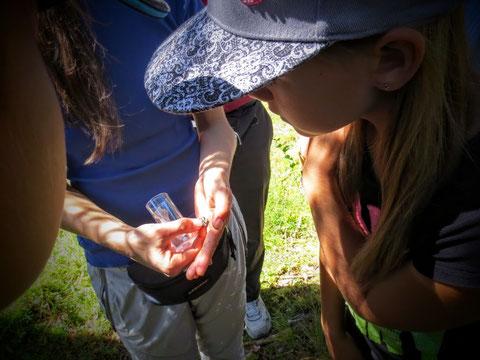 ...staundend und und aufmerksam beobachten die Kinder den professionellen Umgang der Biologin mit den kleinen Tieren......