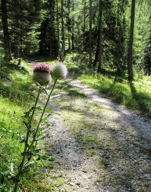 Ein breiter Forstweg zieht hinunter nach Slowenien...dann entlang eines kleinen Wildbaches durch das Železnica Tal hintunter nach Srednji Vrh auf ca. 960 m