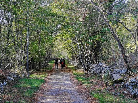 Typisch Karst - schattige Wege von kilometerlangen Trockensteinmauern begrenzt