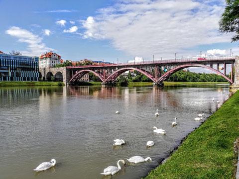Maribor, Marburg, Drau, Drauradweg