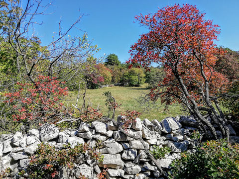 Herbstliches Farbenspiel im Karst