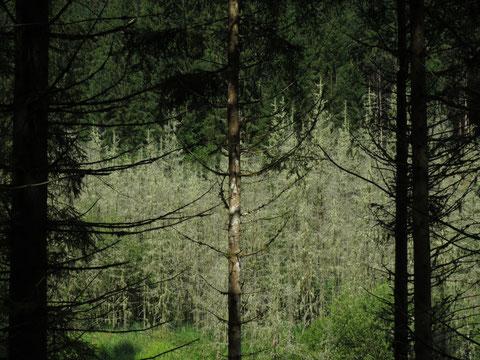 """""""Im Land der geheimnisvollen Wälder"""""""