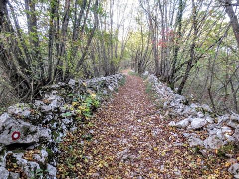 Karst, Lipizza, Lipica, Triest, Alpe Adria Trail