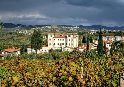 Goriska Brda, Wein