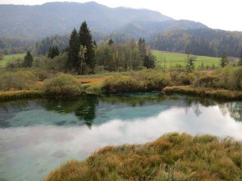 Nur wenige Kilometer von den Weissenfelser Seen entfernt die Zelenci - Quelle der Save Dolinka (Wurzener Save)