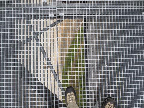 Am Skywalk - 200 Meter Tiefblick