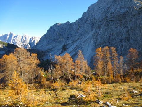 Goldene Lärchen im Herbst, Slemenova Špica wandern, Julische Alpen, Vrsic-Pass
