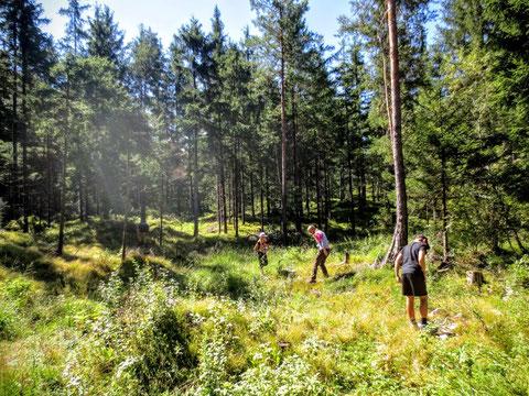 Nach wenigen Minuten Fußmarsch heisst es Ausschwärmen...zur Suche nach Käfern, Spinnen, Skorpionen und anderen faszinierenden Bewohnern des Naturparks Dobratsch