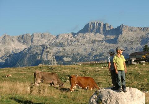 Pecol Alm, Julische Alpen, Montasio