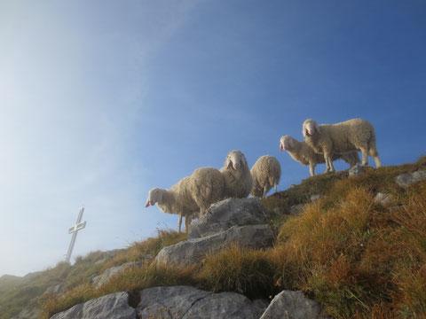 Am Gipfel des Monte Zermula 2.143m - Trotz des frühen Aufbruchs sind wir doch nicht die Ersten am Gipfel!