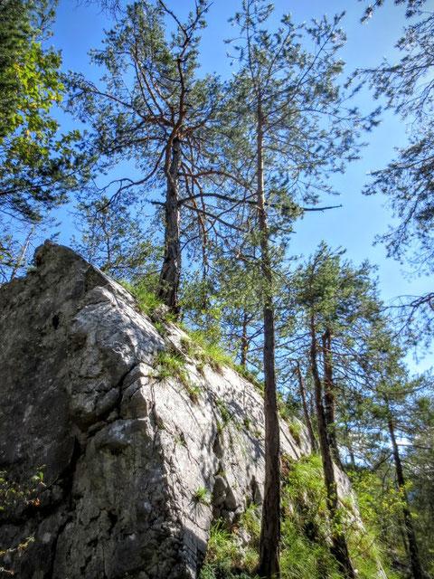 Dobratsch, Schütt, Weinitzen, Villacher Alpe