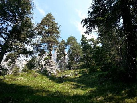 Wildromantische Landschaft wie aus einem Heimatfilm