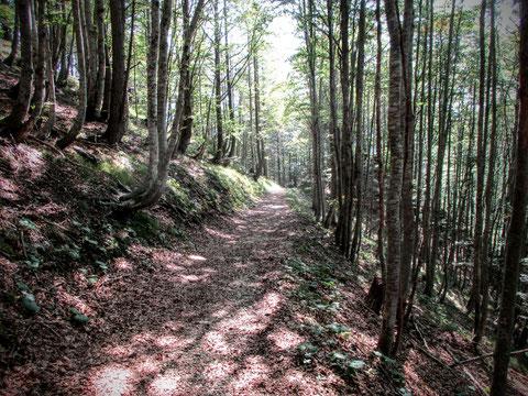 Cjasut dal Scior, Wandern, Karnische Alpen