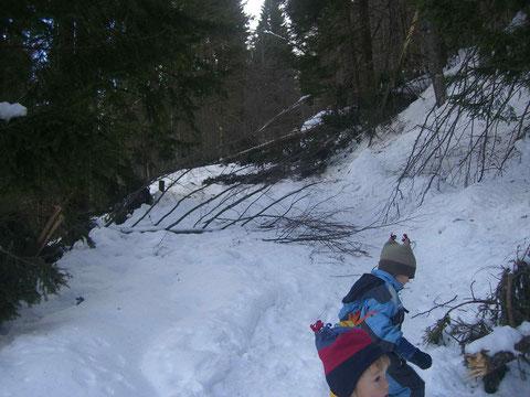 Auf der Strasse zur Pecolalm liegen unzählige umgestürzte Bäume