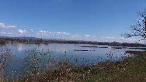 Isola della Cona, Isonzo Mündung, Soca