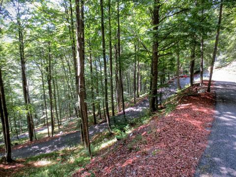 Vom Sella Carnizza geht es in langgezogenen Kehren durch herrlichen, schattigen Buchenwald rasant hinunter ins Resiatal