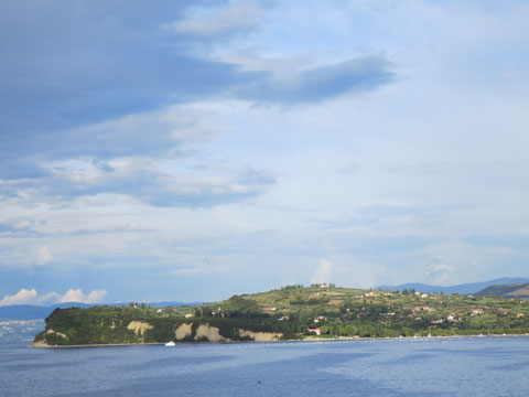 Die  grünen Bucht von Strunjan (Strugnano) zwischen Izola und Piran ist seit 1990 unter Naturschutz gestellt