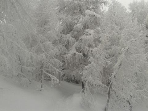 Skitour Luschariberg, Monte Lussari, Tarvis, Pilgerweg, Büßerwe