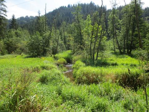 Die Moorlandschaft der Wimitz ist auch für Nicht-Botaniker ein beeindruckendes Erlebnis