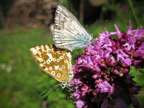 Schon nach wenigen Metern begegnen wir den ersten Schmetterlingen