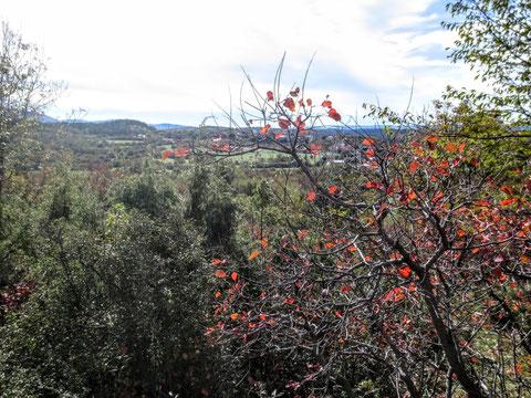 Lokev, Kokos, Alpe Adria Trail, Lipica, Rosandratal