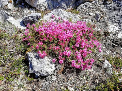 Dobratsch, Villacher Alpe, Schütt, Blumen