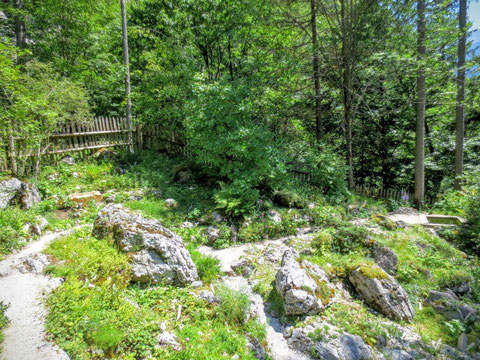 Im Alpengarten Juliana im Trentatal