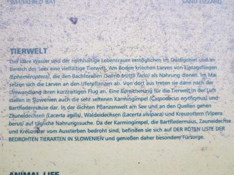 Zelenci, Kranjska Gora, Save Ursprung, Planica, Tamar