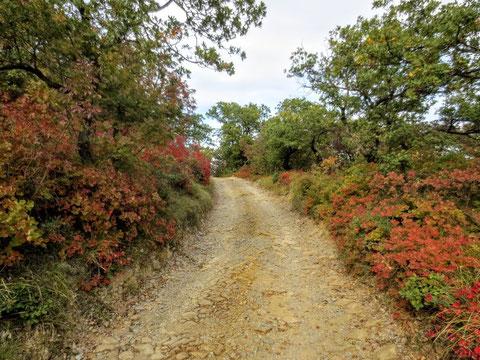 Alpe Adria Trail, Muggia, letzte Etappe