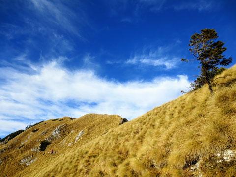 Herbst-/Winterwanderung bei Frühlingstemperaturen auf den Monte Schenone 11.12.2016
