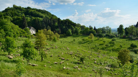 Unsere Herde am Burghof