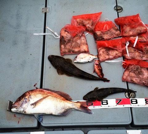 チャーター予約の皆様ご乗船ありがとうございました。(*^_^*)本日の夕食会のおかず調達との事、皆さん初釣りなので仕掛け・釣り方のレクチャーから…。イイダコからのタイラバ(マゴラバ)泣)徐々に慣れて皆さんわきあいあいと楽しんで頂けました。朝早くからお疲れ様でした(*^_^*)又のご乗船お待ちしてます。